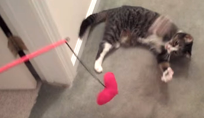 Diy valentine 39 s day cat wand for Diy cat wand