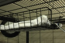 File-Tray-Rat-Hammock