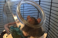 Fish-Bowl-Rat-Bed