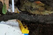 Legos-Crab-Substrate-Divider