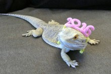 Pipe-Cleaner-Lizard-Party-Headband