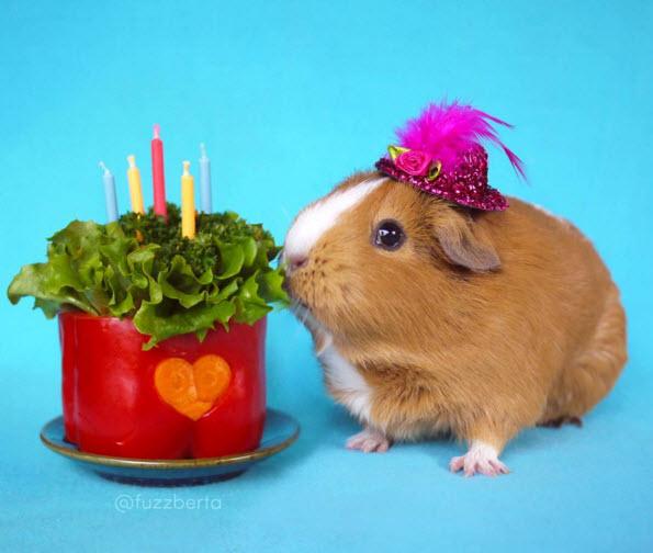 How To Make A Birthday Cake For A Guinea Pig