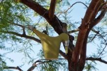 Watering-Can-Bird-Nest