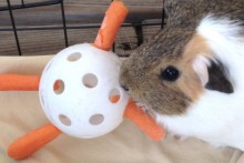 Wiffle-Ball-Carrot-Toy