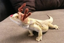 DIY-Bearded-Dragon-Rudolph-Costume