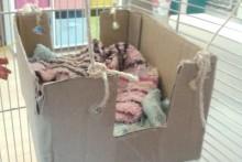DIY-Cardboard-Box-Hammock