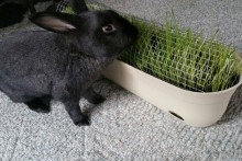 DIY-Rabbit-Grazing-Planter