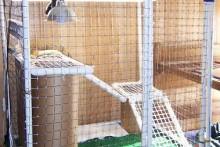 DIY-Square-PVC-Cage