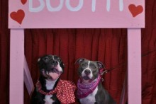 DIY-Wood-Dog-Kissing-Booth