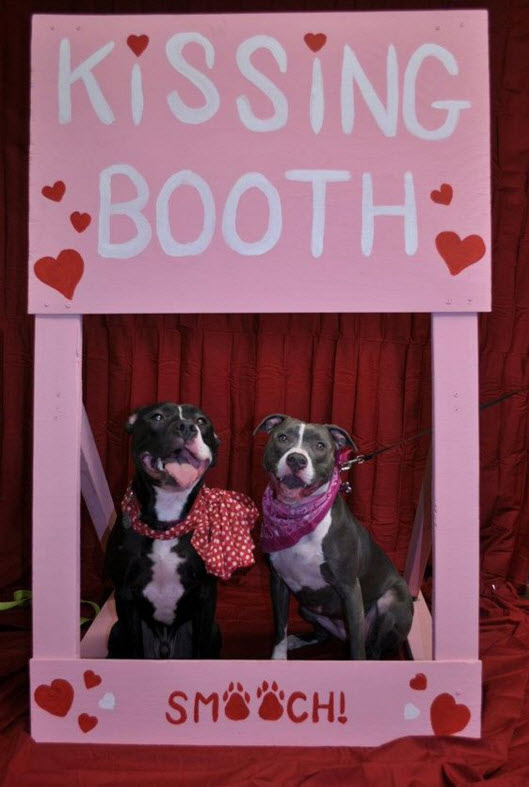 Diy Wood Dog Kissing Booth Petdiys Com