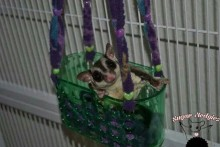 Shower-Caddy-Sugar-Glider-Swing