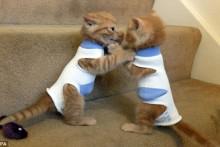 Sock-Kitten-Protector