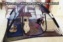 Tent-Cat-Cage