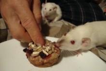Banana-Muffin-Rat-Birthday-Cake