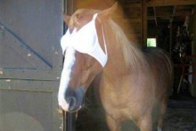 Bra-Horse-Fly-Mask