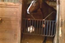 Bucket-Horse-Treat-Dispenser