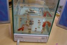 CD-Player-Fish-Tank
