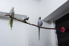 Candle-Stand-Bird-Perch