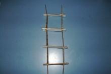 Cardboard-Bird-Ladder