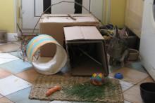 Cardboard-Box-Rabbit-Warrn1