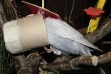 Cardboard-Roll-Bird-Foraging