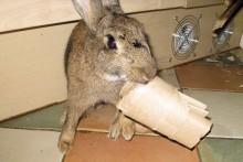 Cardboard-Roll-Rabbit-Toy