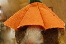 Carrot-Banana-Guinea-Pig-Cookies