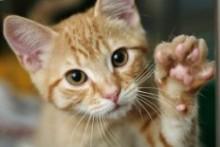 Cheese-Yogurt-Cat-Treats