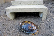 Cinder-Block-Tortoise-Shelter