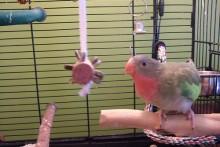 Cork-Bird-Foraging-Toy