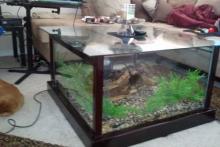 DIY-Aquarium-Coffee-Table