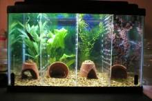 DIY-Aquarium-Tank-Dividers