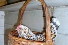 DIY-Basket-Chicken-Nest
