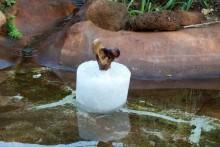 DIY-Bone-Iceburg-Treat