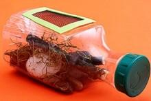 DIY-Bug-Collector-Bottle1