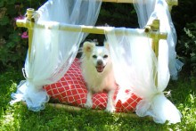 DIY-Canopy-Dog-Bed