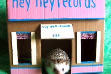 DIY-Cardboard-Rodent-Playhouse