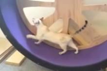 DIY-Cat-Exercise-Wheel