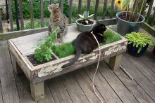 DIY-Cat-Planter-Table