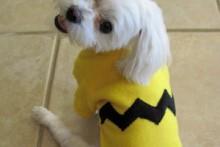 DIY-Charlie-Brown-Costume
