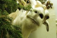 DIY-Christmas-Tree-Disposal-Treat