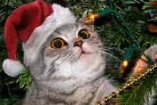 DIY-Christmas-Tree-Pet-Safety