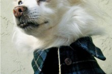 DIY-Collared-Dog-Coat1