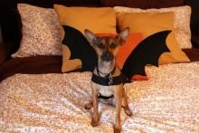 DIY-Dog-Bat-Costume