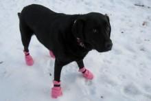 DIY-Dog-Boots