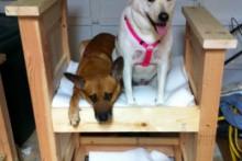 DIY-Dog-Bunk-Bed