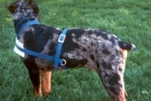 DIY-Dog-Cart-Harness