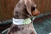 DIY-Dog-Collar-Cover
