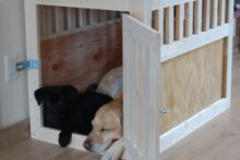 DIY-Dog-Kennel