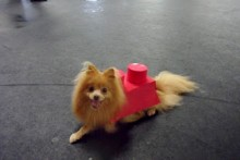 DIY-Dog-Lego-Costume1